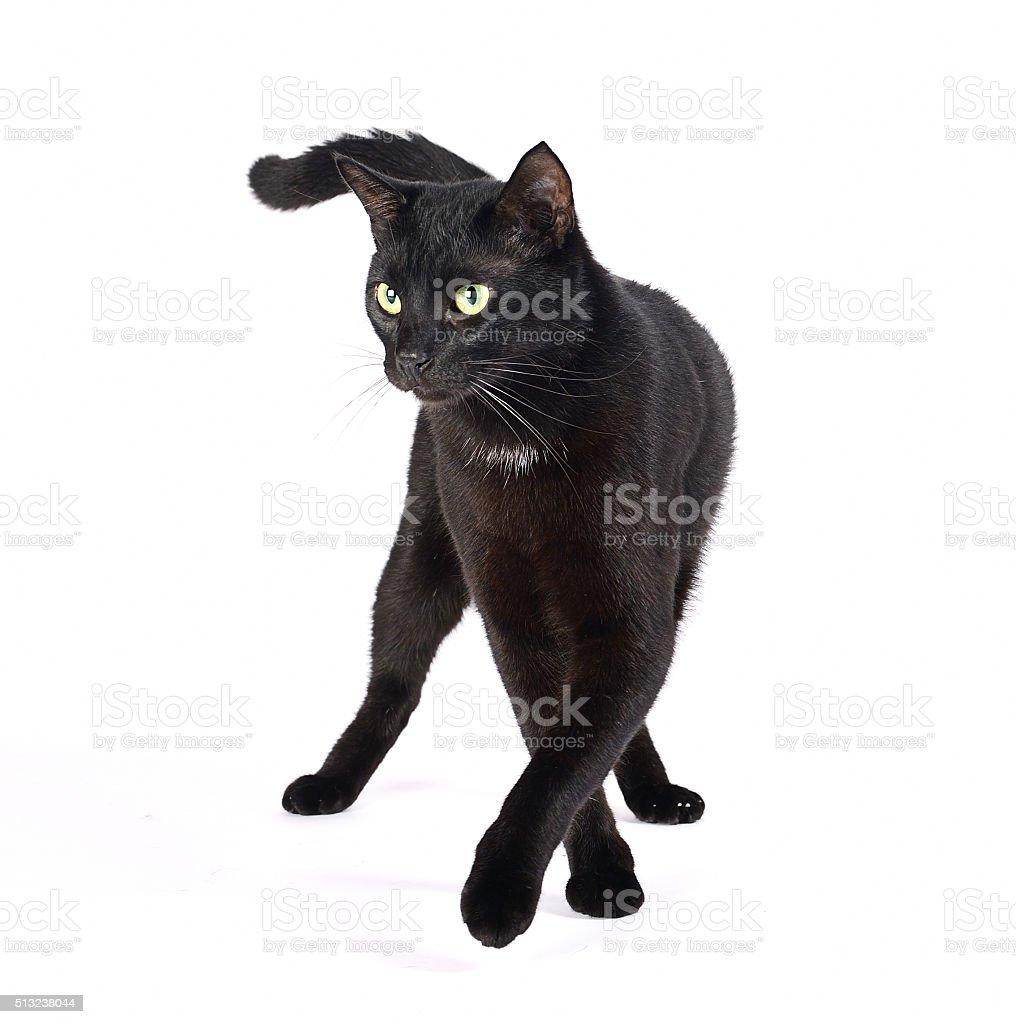 Catwalk black cat stock photo