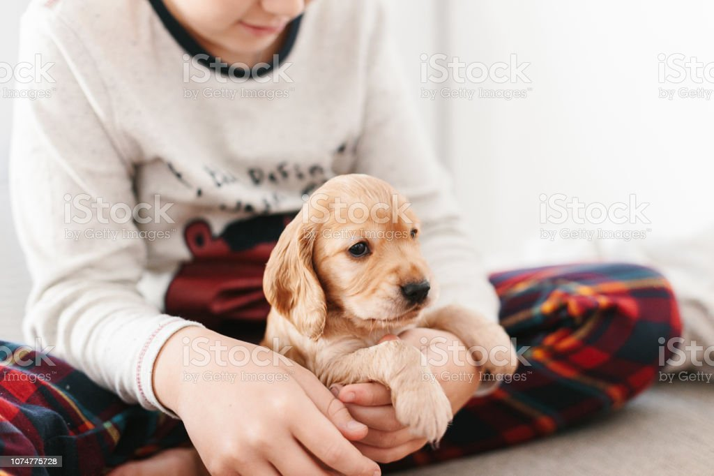 Caucasian Boy Playing With Dog English Cocker Spaniel Puppy At Home Stock Photo Download Image Now Istock