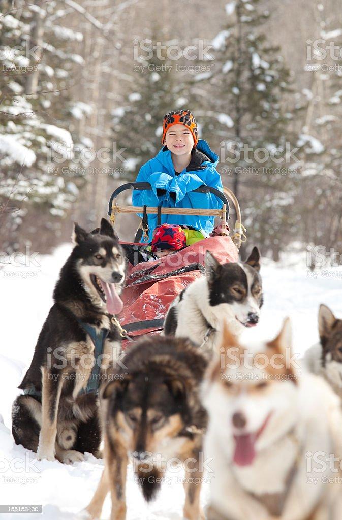 Caucasian child sits in Siberian Husky-drawn sled stock photo