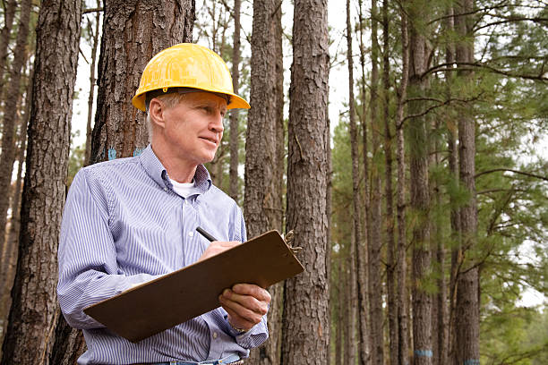 Caucasian man, hardhat. Forester, builder. Studying environmental conservation burned forest. Caucasian man forester or builder in pine thicket forest that has had the undergrowth burned.   Hardhat, clipboard. MORE LIKE THIS... in lightboxes below. forester stock pictures, royalty-free photos & images