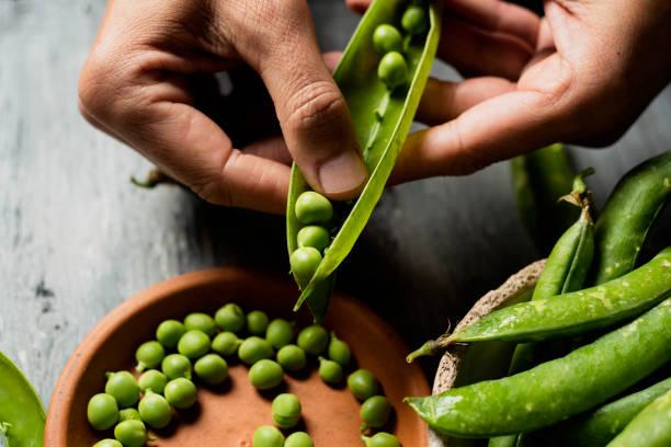 caucasian man shelling peas stock photo