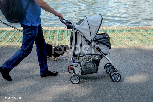 Side view of an unrecognizable Caucasian man walking in a park with baby stroller. Next to him there's a dog walking with a leash of his head. They're walking next to a lake.
