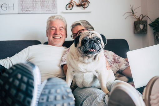 istock Caucasian senior couple sit on the couch with funny pug dog looking. Happiness with love for animals and best friend concept - home daily life with nice people and old puppy 1077623418
