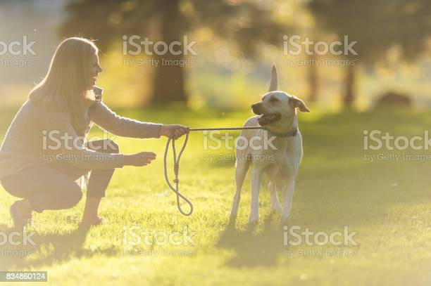Caucasian woman walks her dog on beautiful summer evening in park picture id834860124?b=1&k=6&m=834860124&s=612x612&h=2y3gb3xqpn0yj51qm6o4xyr afijva2i gvwsmcf6fg=