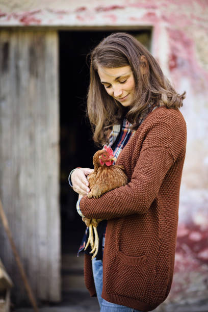 caucasian young woman with blond hair holds a hen in a farm - allevatore foto e immagini stock