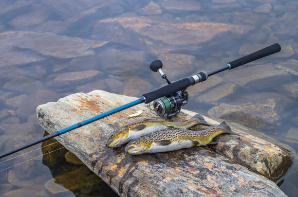 Caught brown trout fish and fishing tackle on river stone Caught brown trout fish and fishing tackle on river stone cutthroat stock pictures, royalty-free photos & images