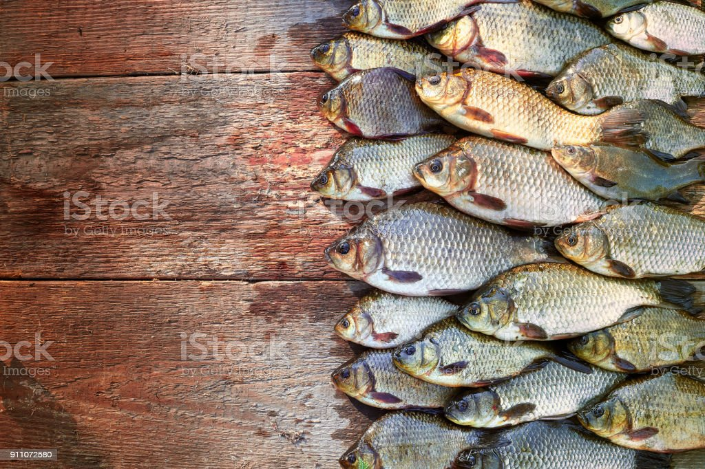 Caught carp fish on wood. Catching freshwater fish on wood background. A lot of bream fish, crucian or roach on natural wood background. Background from big quantity of river fish on wooden boards.Free space for your text stock photo