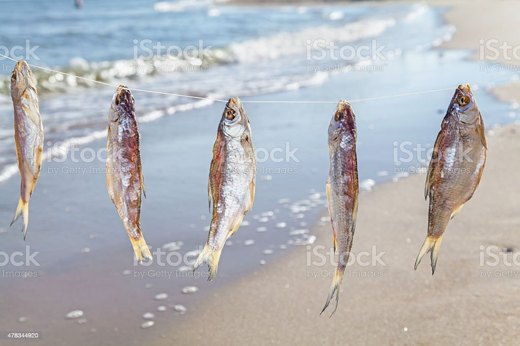 Caught fish drying on rope stock photo