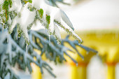 verglas, glace, branche, nature