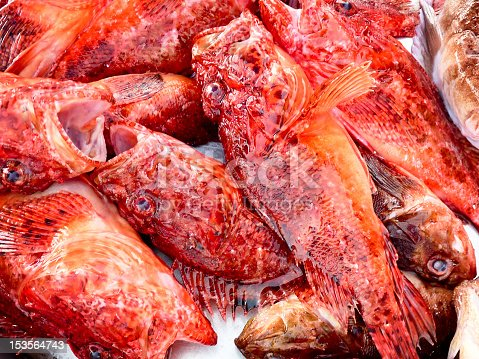 caught red scorpionfishes on a table