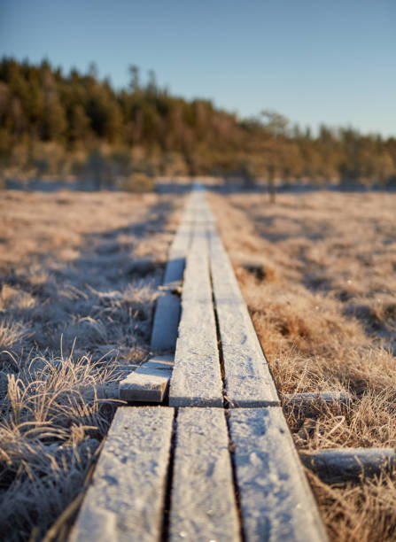 Causeway in the middle of frozen swamp in Finland stock photo