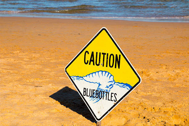 Caution Bluebottles Sign on Sydney Beach stock photo