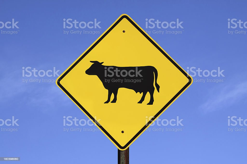 Caution! Cattle Crossing royalty-free stock photo