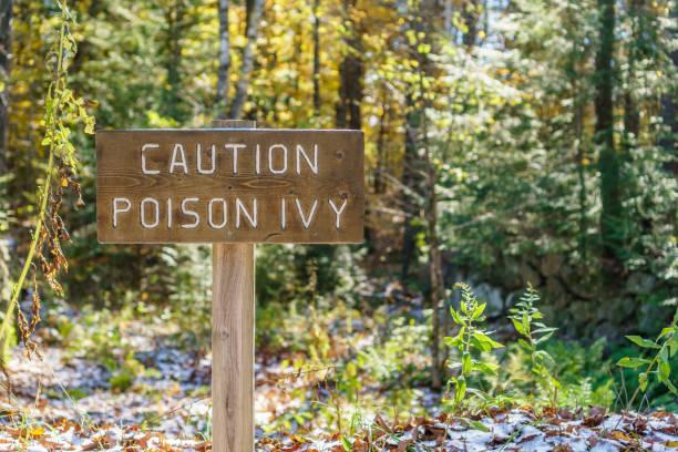 vorsicht poison ivy - poison ivy pflanzen stock-fotos und bilder
