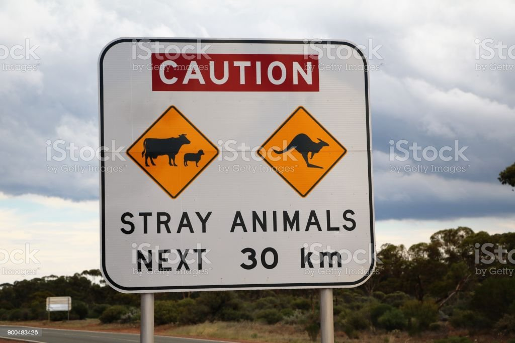 Caution Stray Animals Next 30 km stock photo
