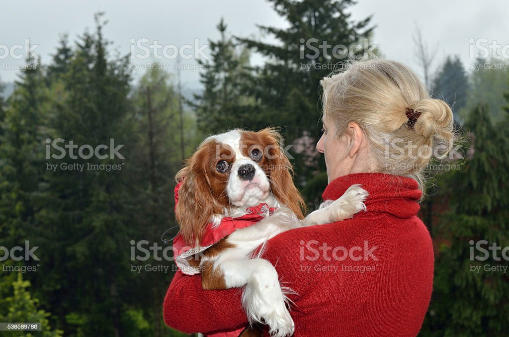 Cavalier King Charles Spaniel in Woman's Arms in Landscape stock photo
