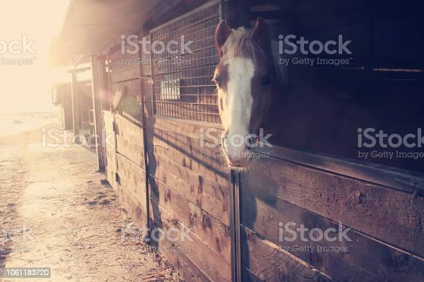 Cavallo affacciato alla stalla in inverno picture id1061183720?b=1&k=6&m=1061183720&s=612x612&h=g2w2lnj3naee07u3hu7b zp8z79hqe8u6a6w6 gd63s=