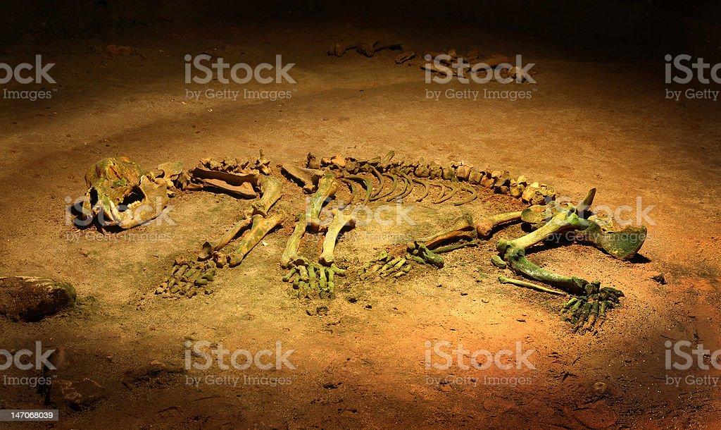 Cave bear skeleton - Ursus spelaeus stock photo