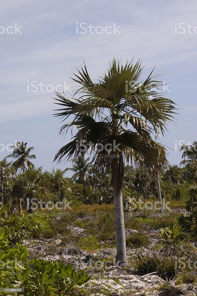 Cayman Islands, Bush on Pedro Bluff stock photo