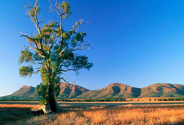 Cazneaux Baum, Wilpena Pound, South Australia. – Foto