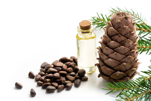 Cedar cone, branches and cedar oil on white background. Close up. Copy space. stock photo