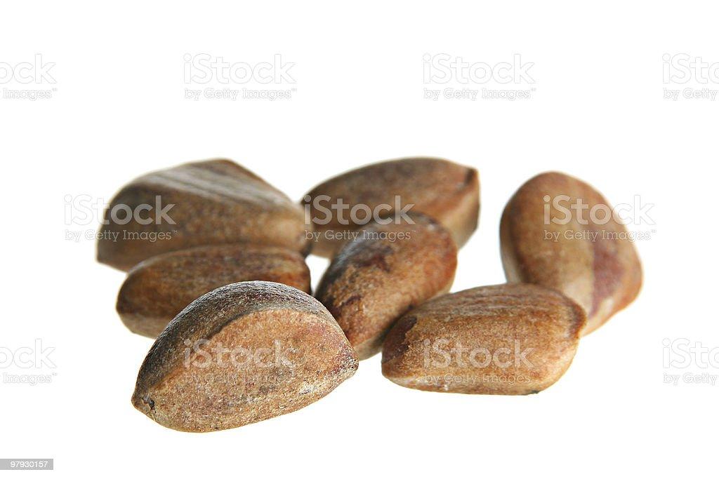 Cedar nut royalty-free stock photo