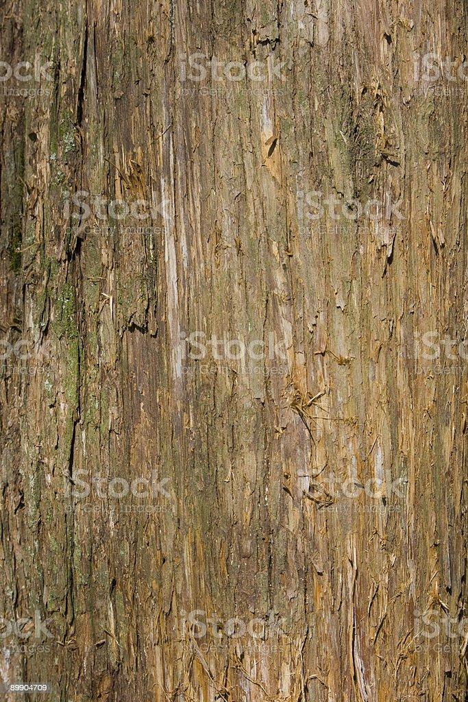 Cedar Tree Bark Background royalty-free stock photo