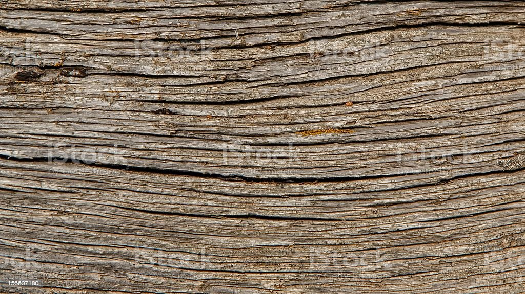 Cedar Wood Log royalty-free stock photo