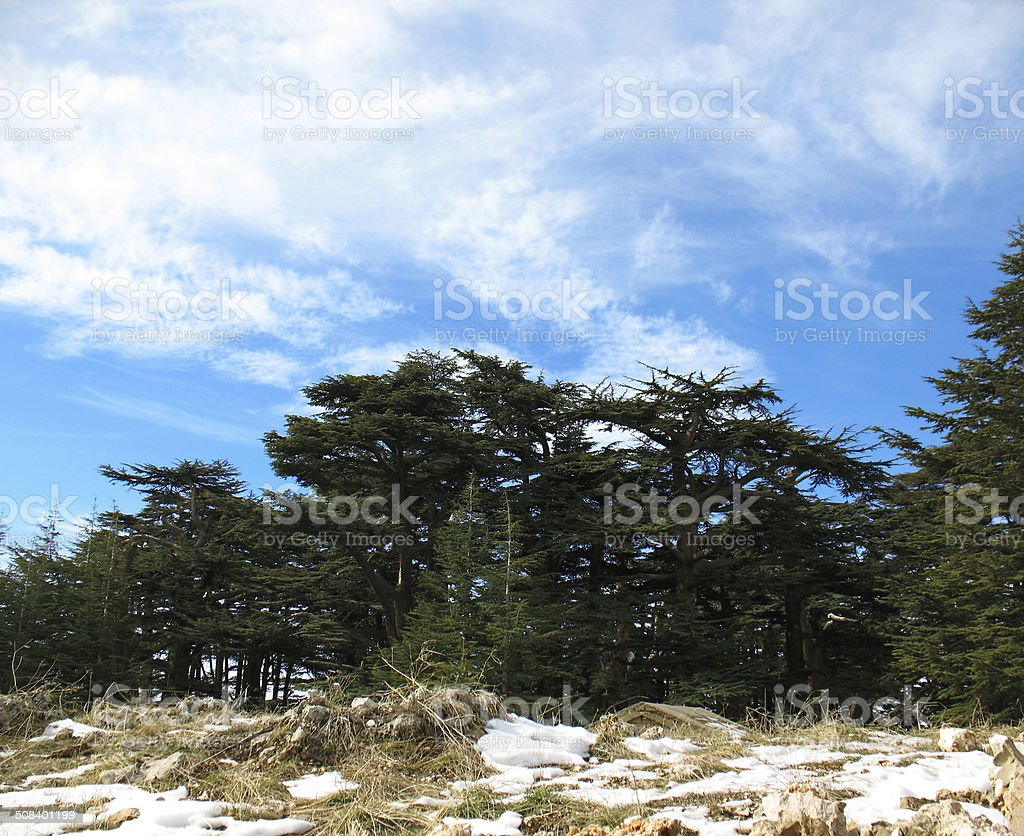 Cedars of the Lord, Lebanon stock photo