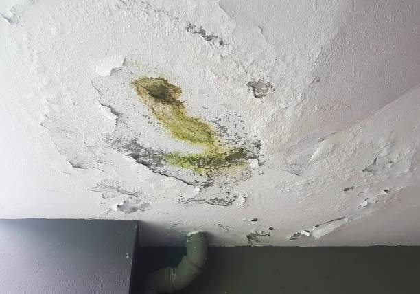 plafond mal - schimmel stockfoto's en -beelden