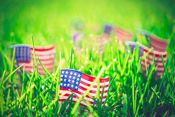 Celebrate American holidays. American flags in vibrant grass stock photo