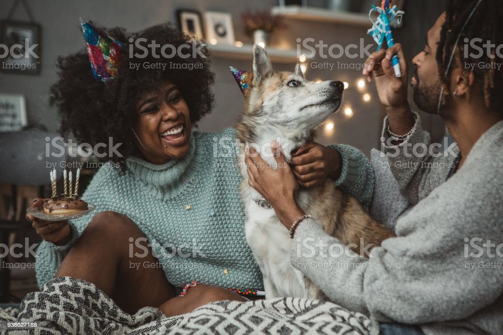 Celebrating dog birthday stock photo