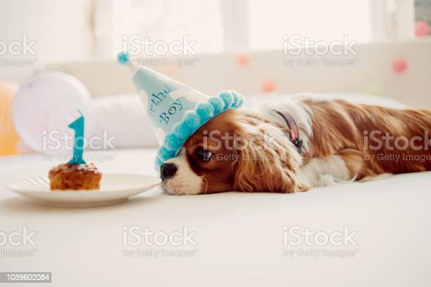 Celebrating humans best friend birthday picture id1059602084?b=1&k=6&m=1059602084&s=612x612&h=d tqgj6jhbfknh4vlv5ujrzoj5kc5r2sia1dgerfwqg=