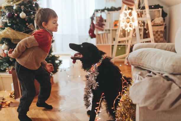 feiern sie silvester - silvester mit hund stock-fotos und bilder