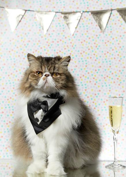Celebration Cat stock photo