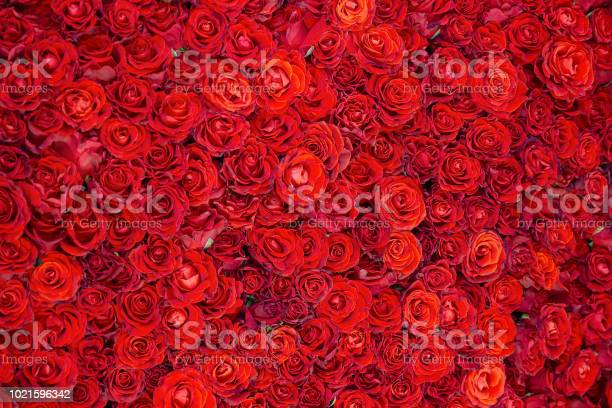 Celebratory background of beautiful red roses flowers picture id1021596342?b=1&k=6&m=1021596342&s=612x612&h=qoighcsqert3wnkdrbzemxyocfsh760mr  gvwgxzyi=