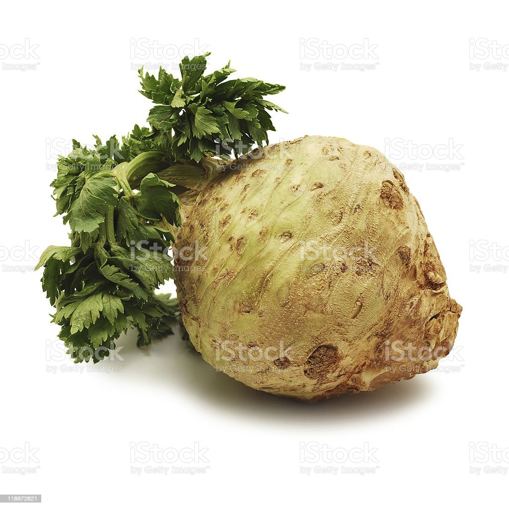 Celery attached to a large root royalty-free stock photo