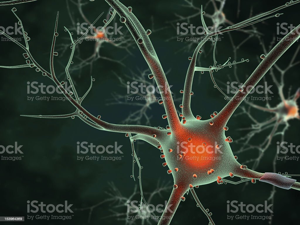 Cell body of a Neuron stock photo