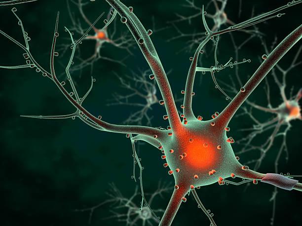 Cell body of a Neuron stock photo