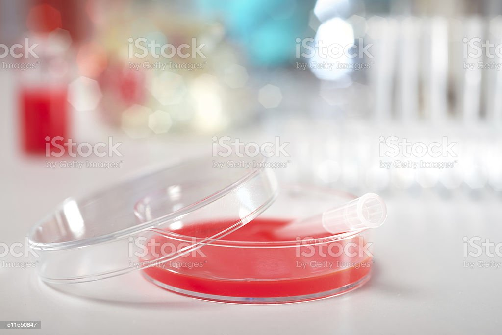 Cell culture dish stock photo