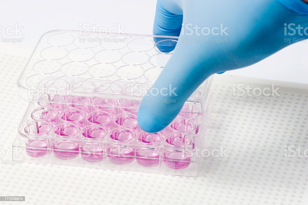 Cell culture royalty-free stock photo