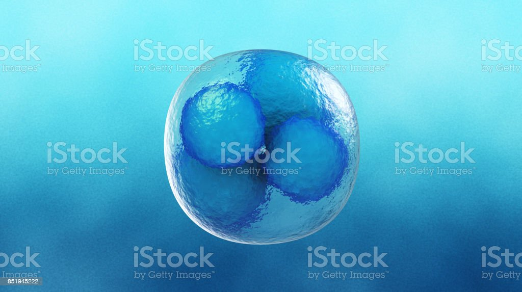 Cell Division stock photo