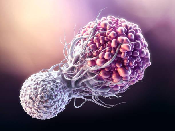 t cell fighting cancer cell - ematologia foto e immagini stock