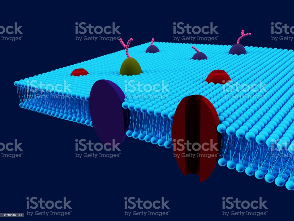 Cell membrane stock photo