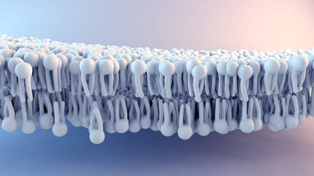 Cell Membrane structure in motion Cell Membrane structure in motion lipid stock pictures, royalty-free photos & images