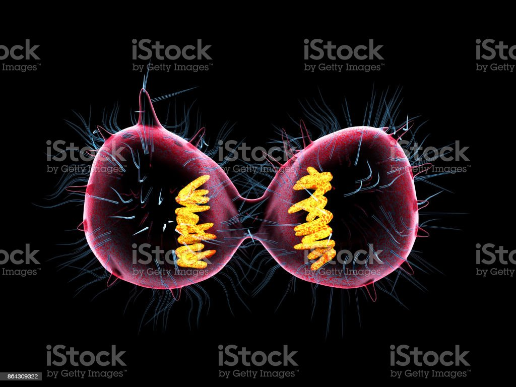 Cell mitosis stock photo