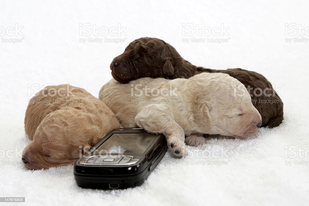 Cell Pups royalty-free stock photo