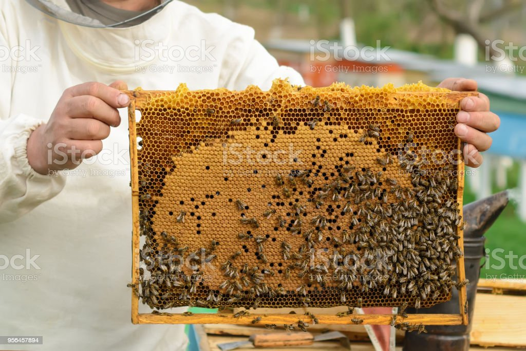 Cell with larvae of bees and young bees. stock photo