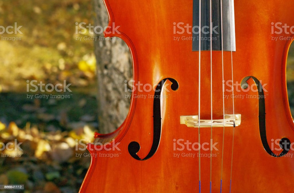 Cello outdoors closeup in the park in fall autumn day with colourful leaves stock photo