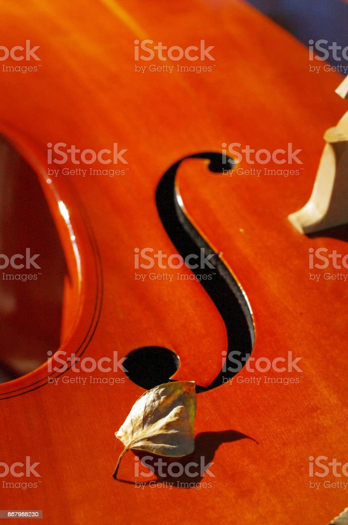 Cello outdoors closeup in the park on fall autumn day with colourful leaves stock photo